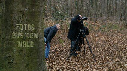 Fotos Aus Dem Wald