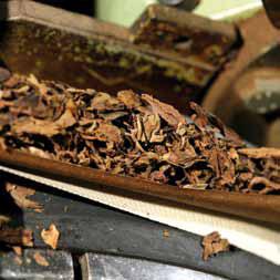 Falsche Vermutungen über Zigarren