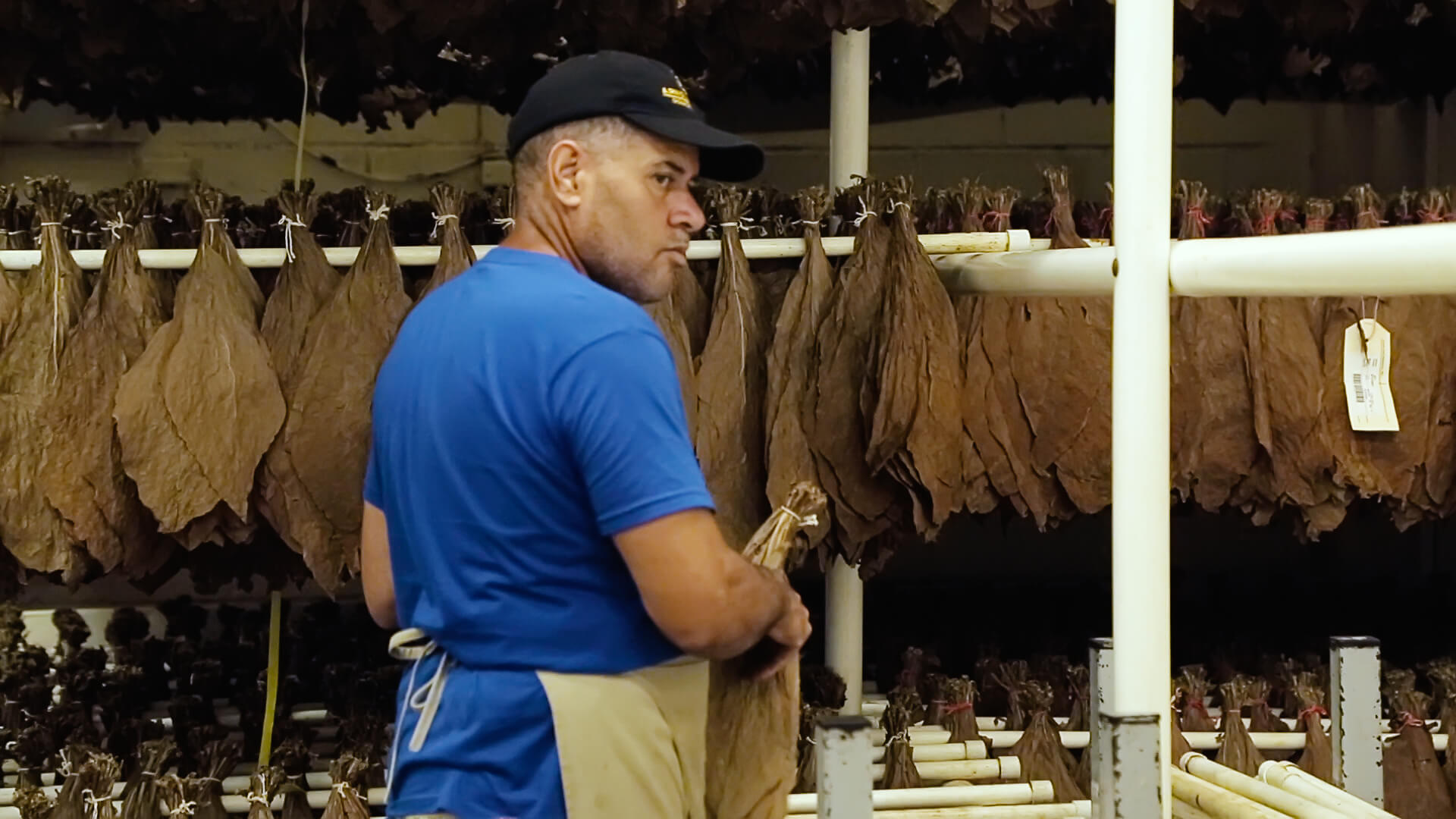 Trocknung des Tabaks im Trockenschuppen