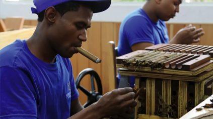 Wie eine Zigarre entsteht