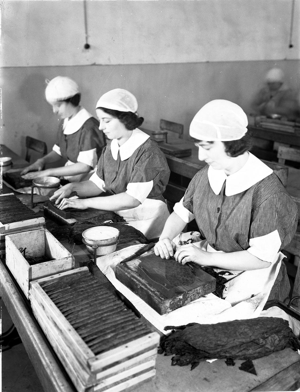 Toscano Firenze 1935 - Lavorazione sigari a mano